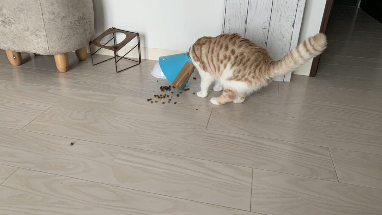 ご飯をこぼすユキちゃん